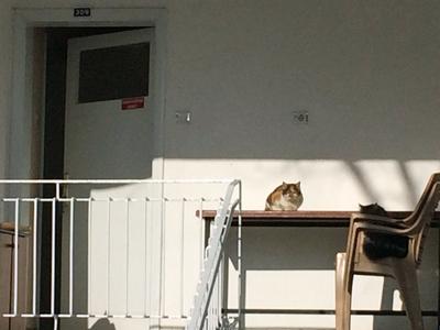 晴れ間が見えたら猫日和1