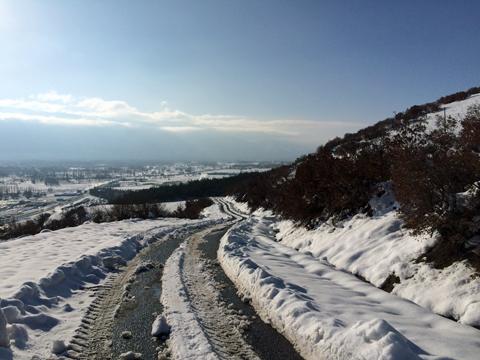 裏山を登ってみた