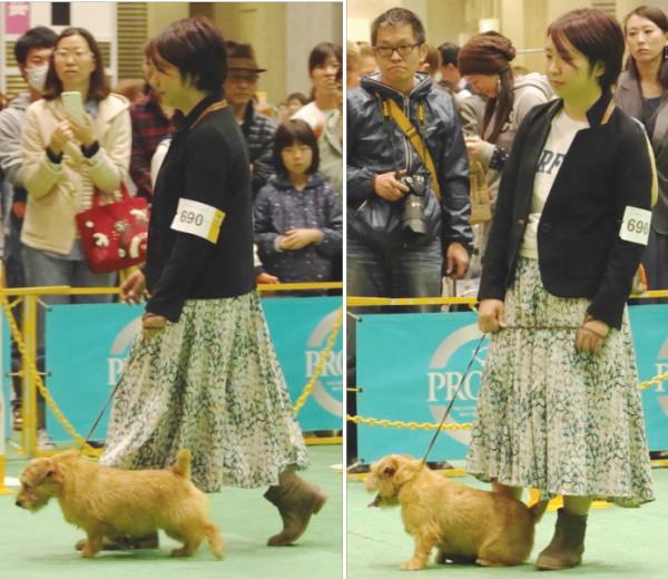 201544 ジャパンインター_1480