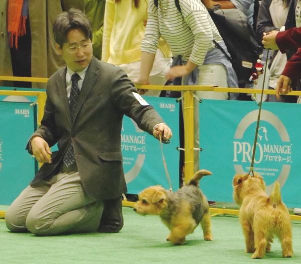 201544 ジャパンインター_9886_0
