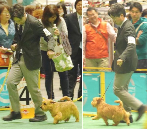 201544 ジャパンインター_9929