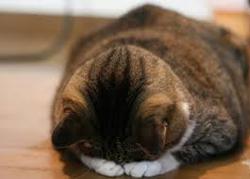 150207_cat.jpg