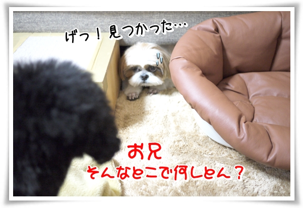 P1080581_1.jpg
