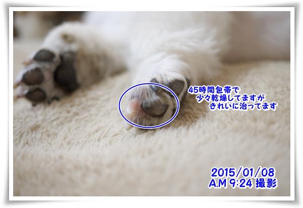 P1080667_1.jpg