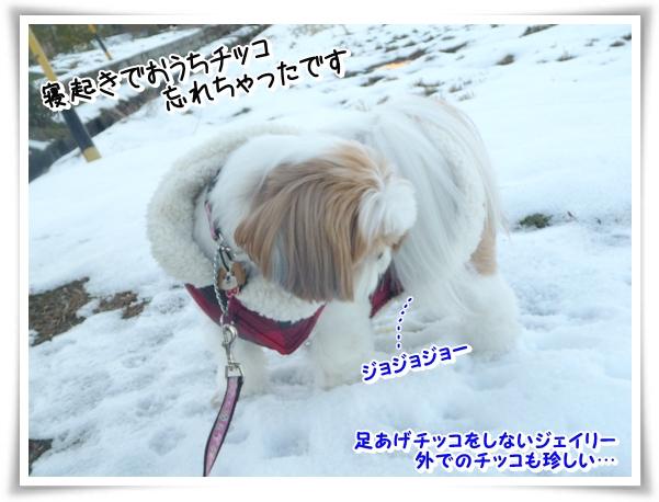 P1080751_1.jpg