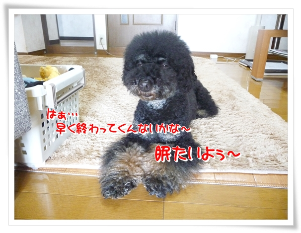 P1080846_1.jpg