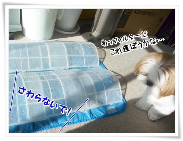 P1080856_1.jpg