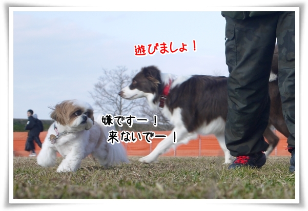 P1080858_1.jpg