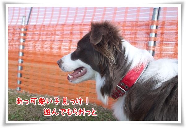 P1080865_1.jpg