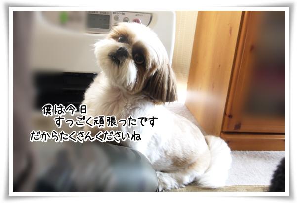 P1080951_1.jpg