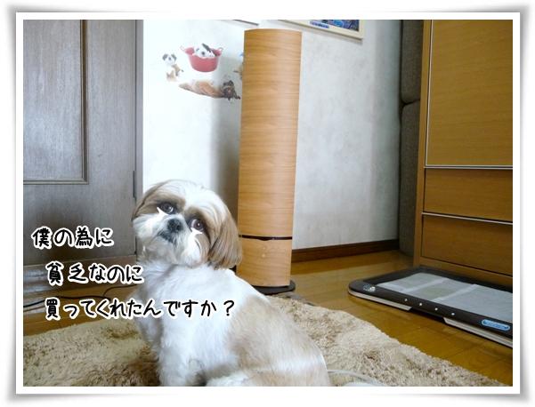 P1090269_1.jpg