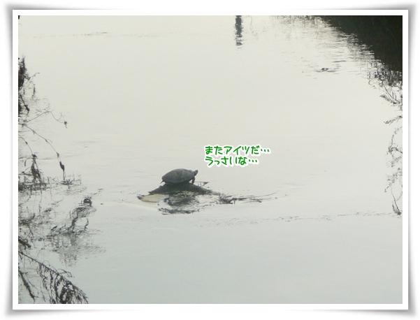 P1090379_1.jpg
