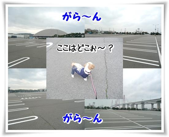P1090743_1.jpg