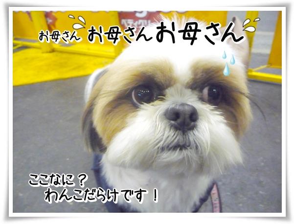 P1090762_1.jpg