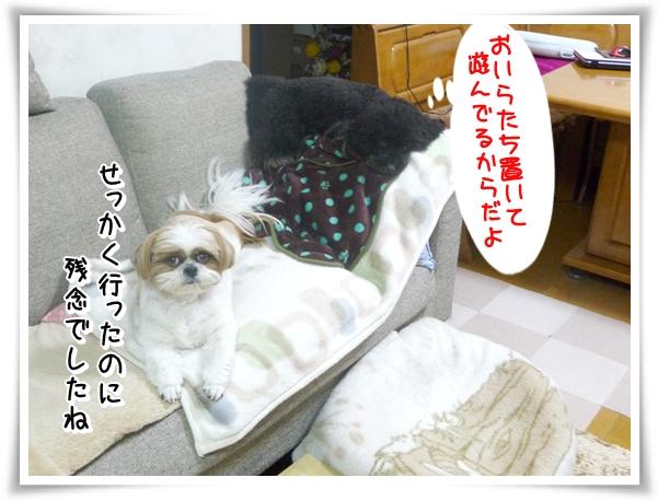 P1090884_1.jpg