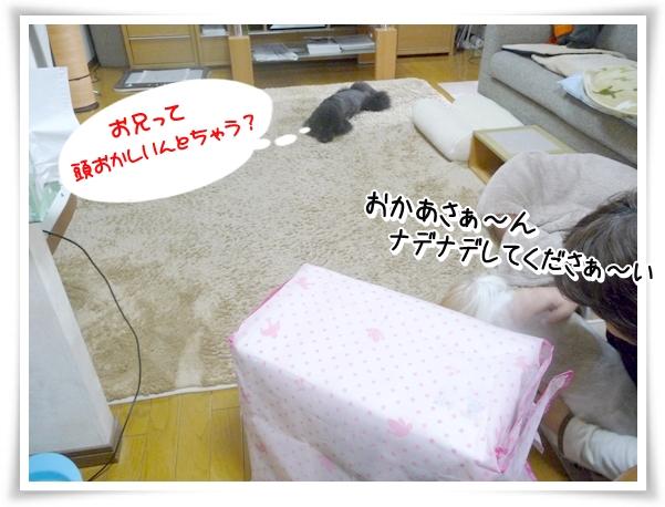 P1100077_1.jpg