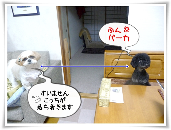 P1100219_1.jpg
