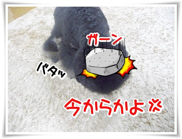 P1100357_1.jpg