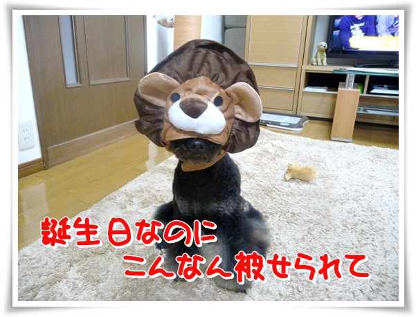 P1100362_1.jpg