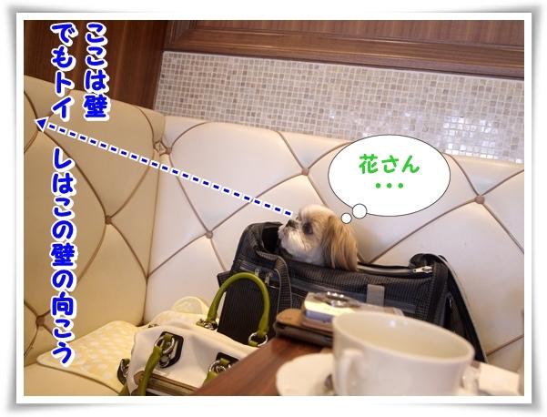 P1100372_1.jpg