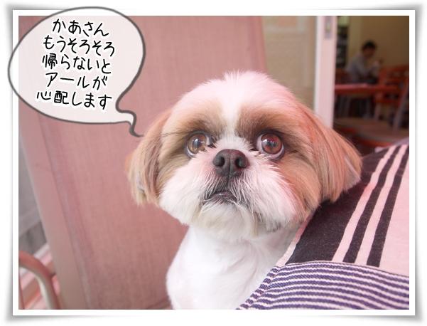 P1100429_2.jpg