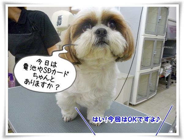 P1100475_1.jpg
