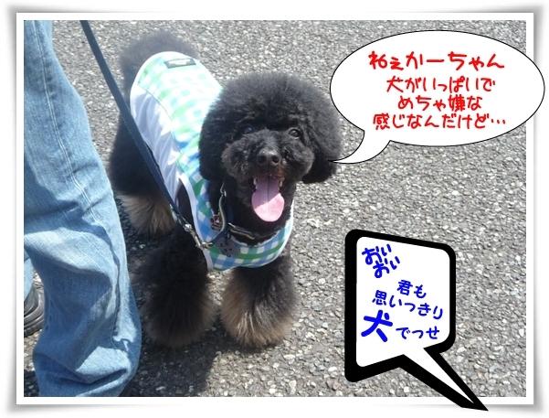 P1100546_2.jpg