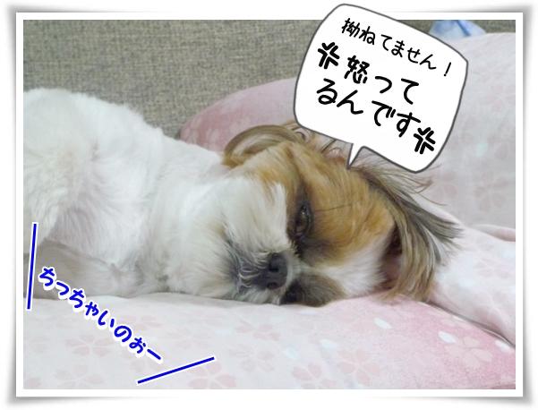 P1100632_1.jpg