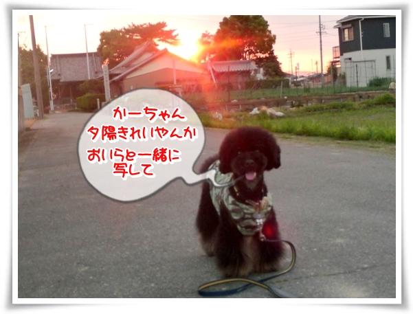 P1100647_1.jpg