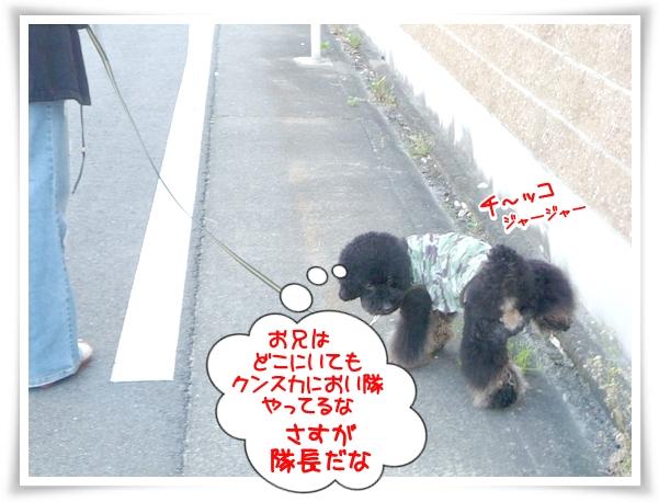 P1100708_1.jpg