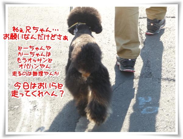 P1100917_1.jpg