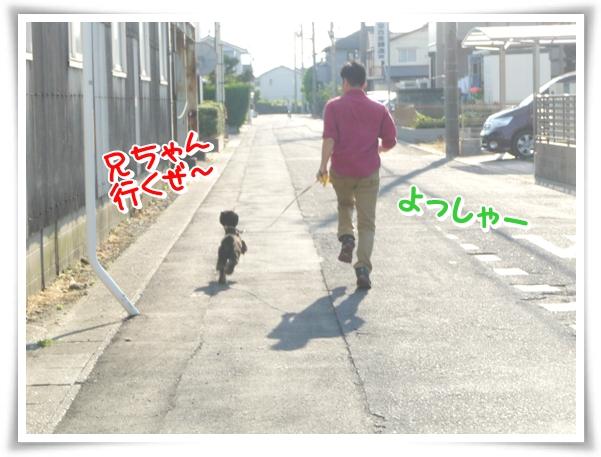 P1100918_1.jpg
