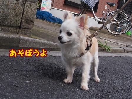 blog6219a.jpg
