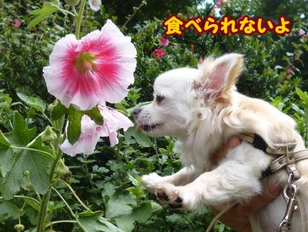 blog6322a.jpg