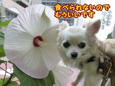 blog6325a.jpg
