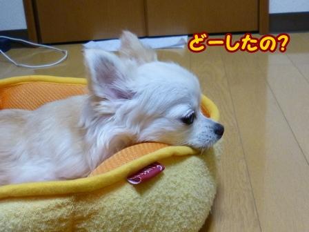 blog6333a.jpg