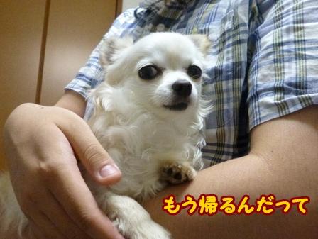 blog6335a.jpg