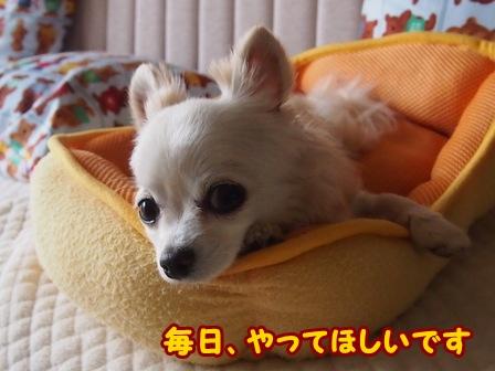 blog6351a.jpg