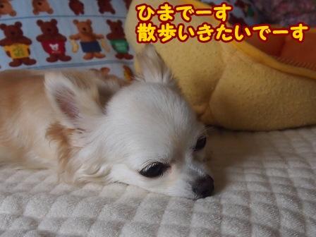 blog6376a.jpg
