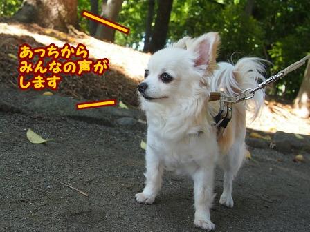 blog6383a.jpg