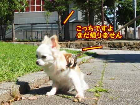 blog6384a.jpg
