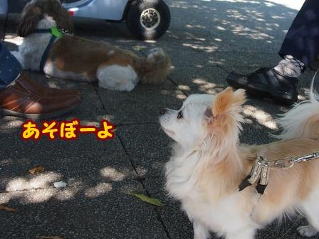 blog6385a.jpg