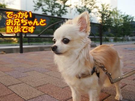 blog6488a.jpg