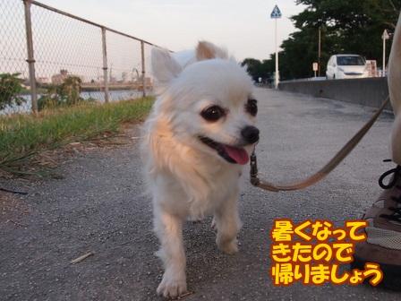 blog6495a.jpg