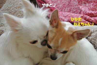 20121129+009_convert_20150128143207.jpg