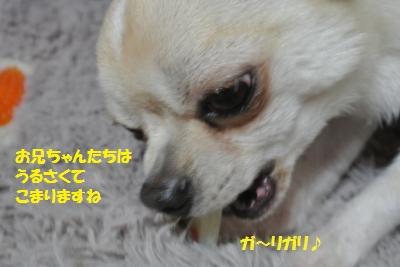 DSC_0008_convert_20150128095558.jpg