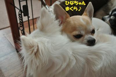 DSC_0049_convert_20150129092926.jpg