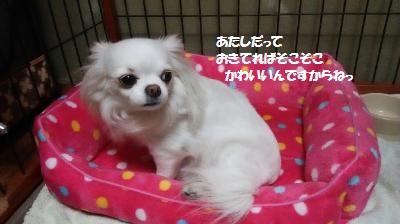 DSC_0106_convert_20150515134400.jpg