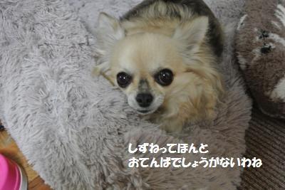 DSC_0385_convert_20150220143732.jpg