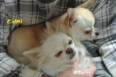DSC_0434_convert_20150223104506.jpg